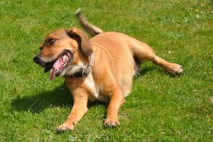 Vorteile von Hundehanf - reines Naturprodukt