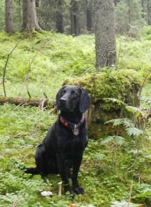 Unsere Hunde sind Nachfahren von Wölfen und Wildhunden