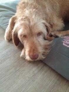 Alter Hund - Darmentzündung - Lahmheit