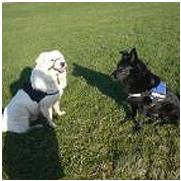 Hundehanf - glänzendes Fell schwarzer und weißer Hund