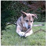 Hundehanf - Hund mit glänzenden Fell