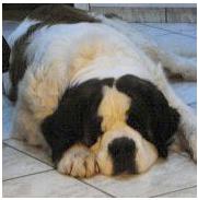 Hundekrankheiten - Hund mit schlechtem Appetit
