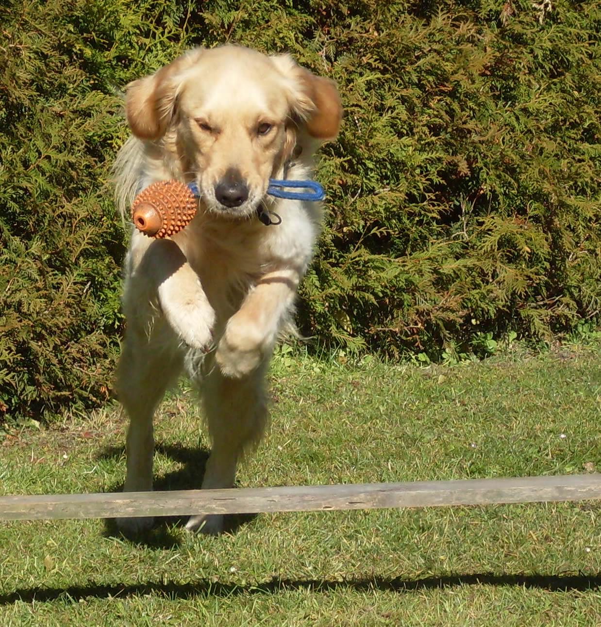 Qualitaetsprodukt Hundehanf für einen fiten und gesunden Hund