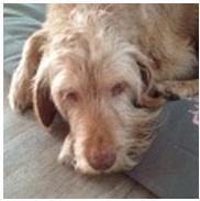 Futter für alte Hunde - Alte Hunde haben ein großes Ruhebedürfnis - Hundehanf unterstütz deinen Hund auch im Alter